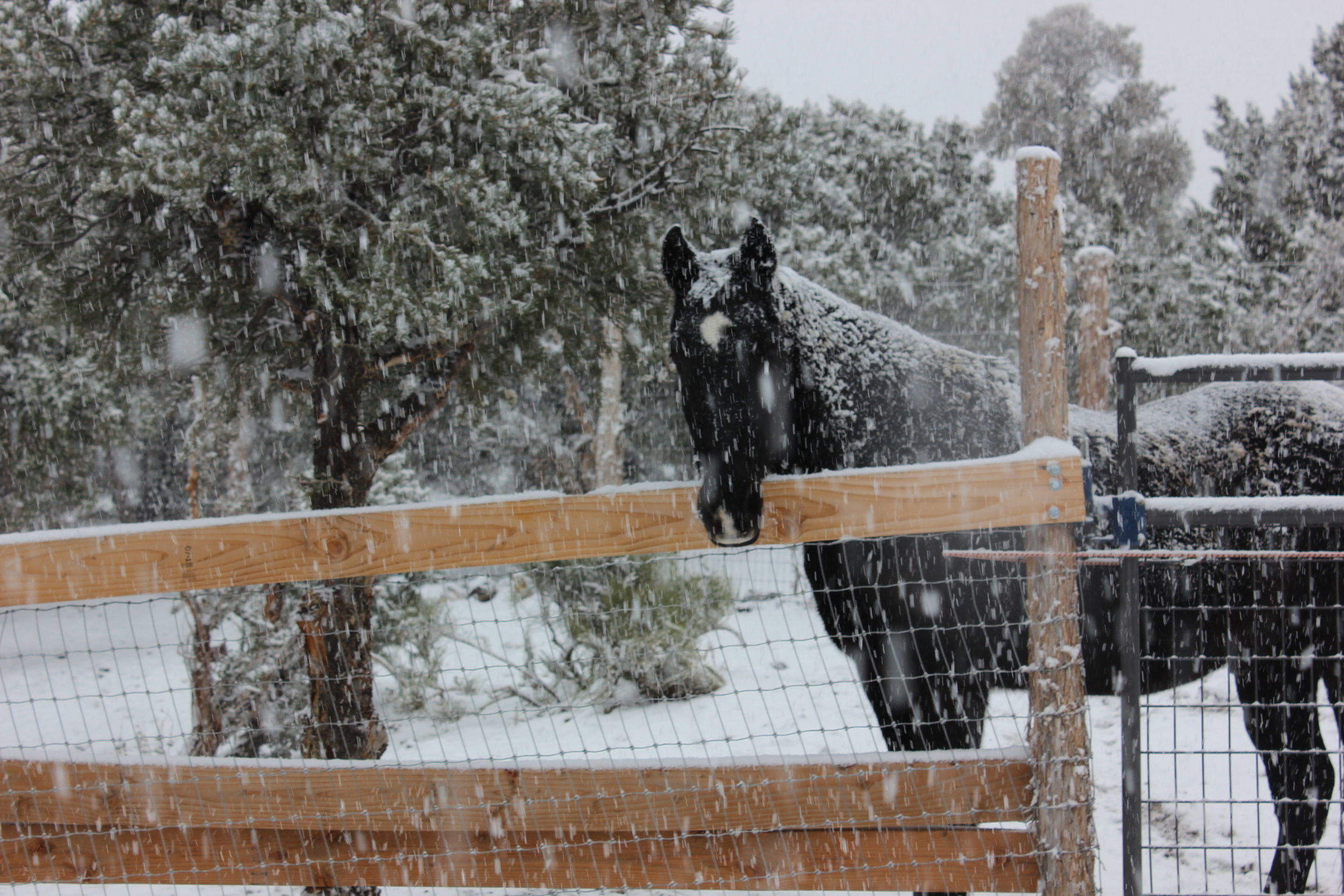 This is our horse, Bud, in the first snow of the year! Our horses are new to us---they joined our family last May, so being sure they were ready for the cold up here in the mountains was something we gave a lot of thought to.
