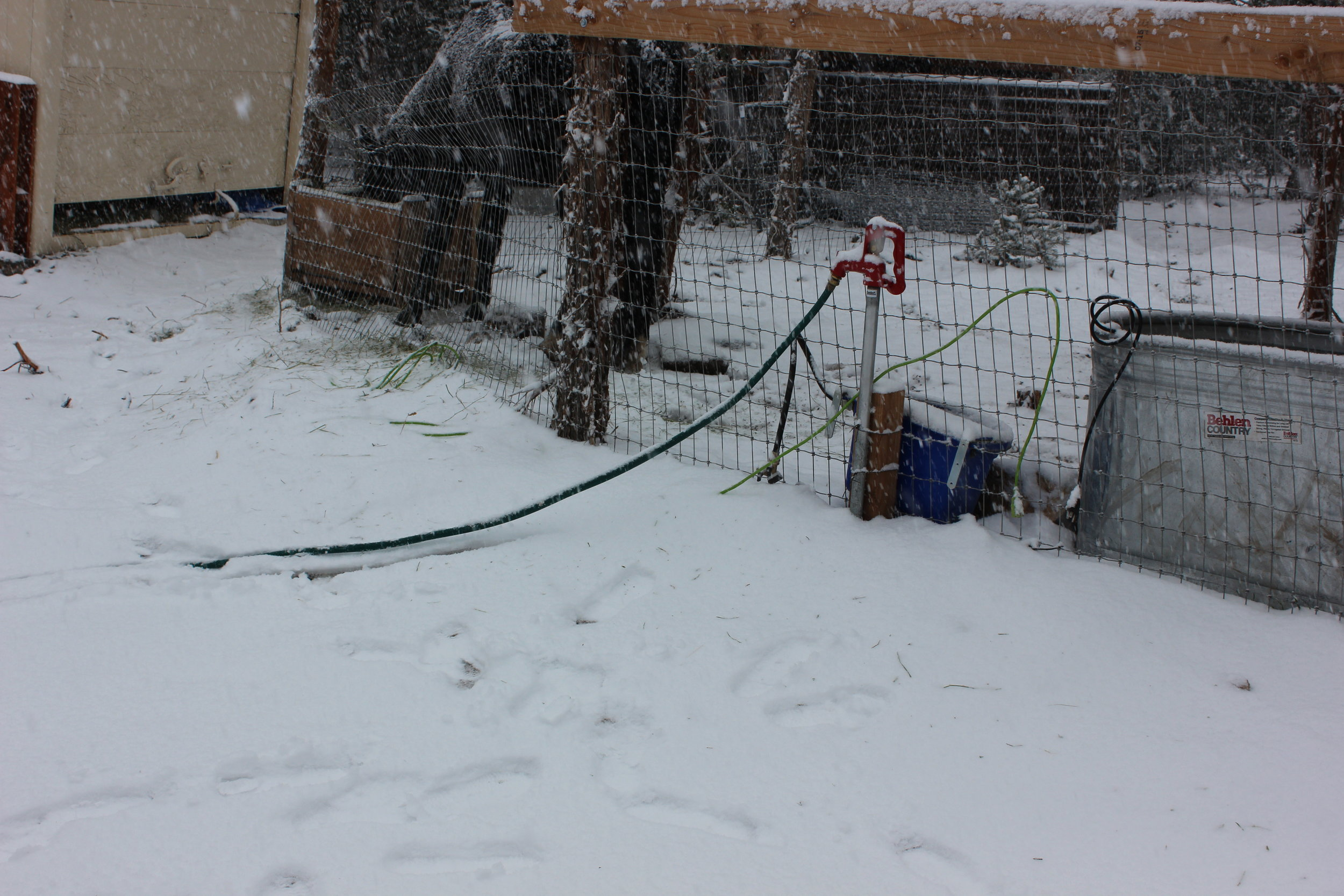 The water spigots freeze if we leave them open.  So here's how we handle that problem and always have running water:  We leave the handle down and make sure the hose (which we cut short--about 6 feet) is running down hill after using it.  That way, there is no water in the line to freeze.  When we lift the handle---there's our water! We only get into the single digits here so far, so I'm not sure how this system would work in a VERY cold place.