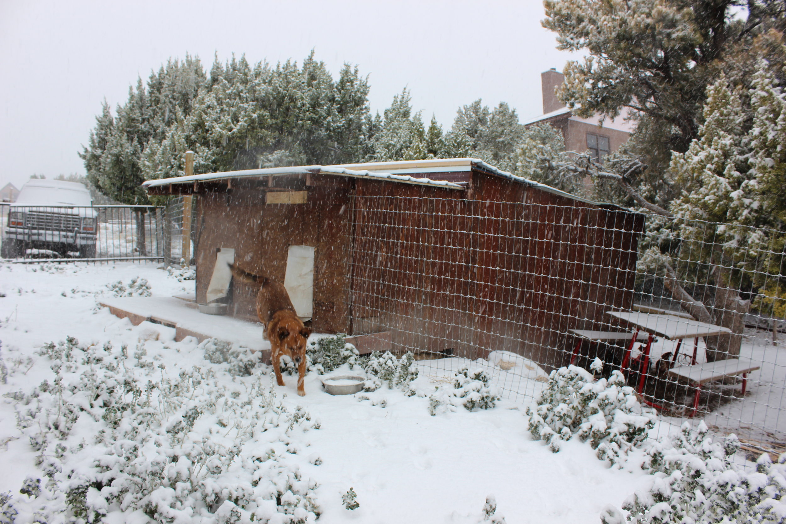 Here is the dog house and chicken coop.  The dog houses back up to the chicken coop, and all sides are insulated.  This makes for a nice cozy coop for the chickens and a great place for the dogs to get out of the elements if they need during the day.  They come in with us at night.