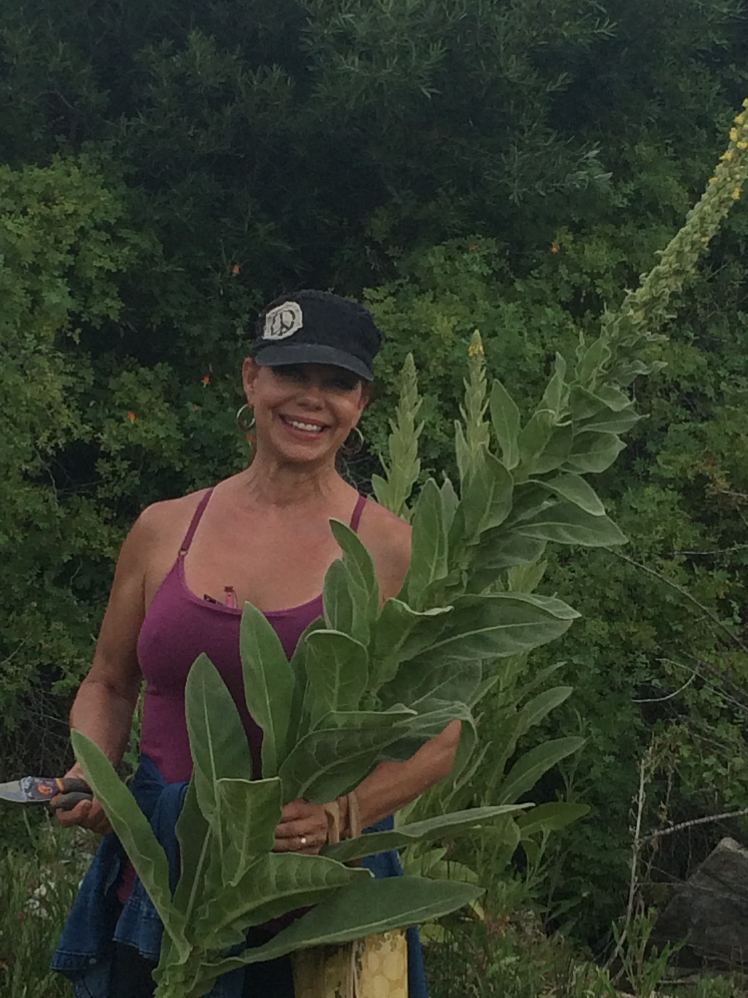 Foraging for Mullein.
