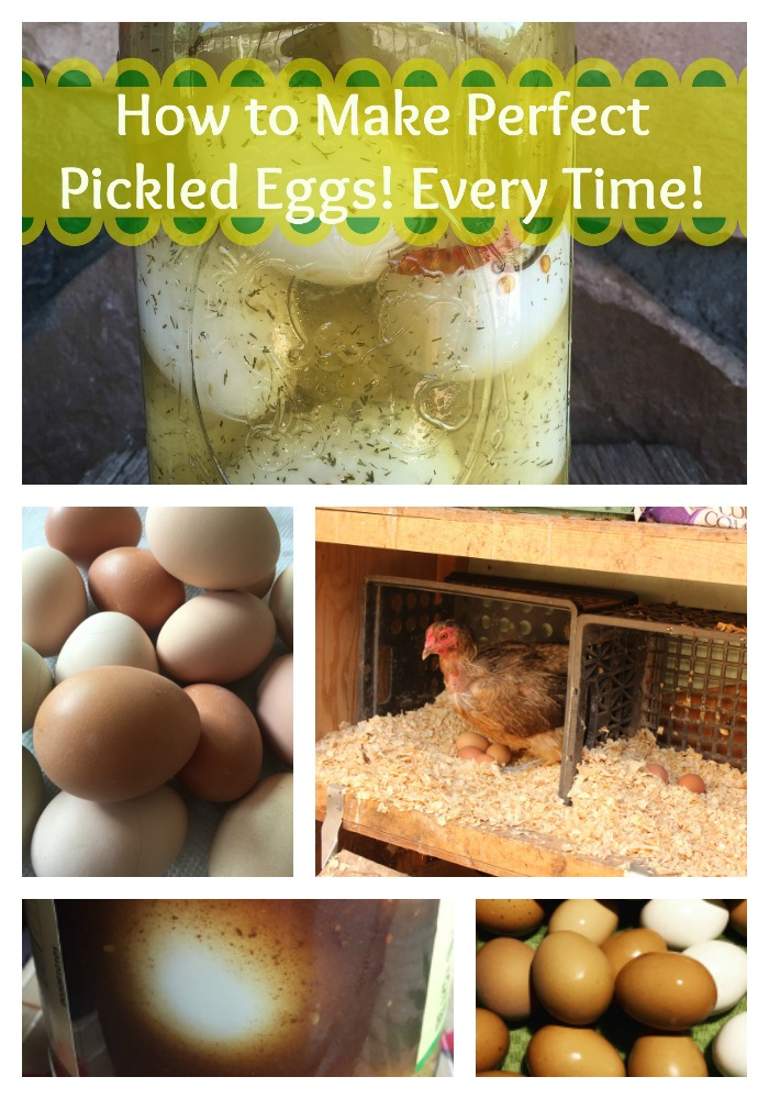 Find out how to make perfect pickled eggs!