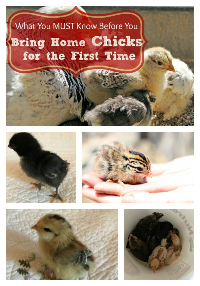 Whether you bought those cute little fluff balls on impulse or if you planned on it for months...Here are the basics you MUST know before you bring them home in order to make their transition happy and smooth for everyone!