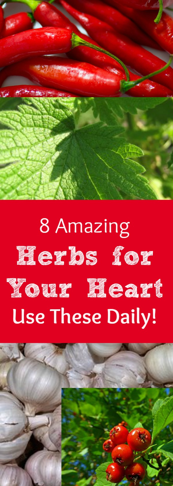 Do you or a loved one experience heart health problems? Heart health issues are a leading cause of doctors visits and hospitalizations. There are herbs you can use daily, along with making some common sense lifestyle changes that can support the health of your circulatory system and heart. Here is a list of herbs to consider using often! #healingharvesthomestead #heart #health #herbs #herbsforyourheart #for #healthyheart #herbalism #plantmedicine