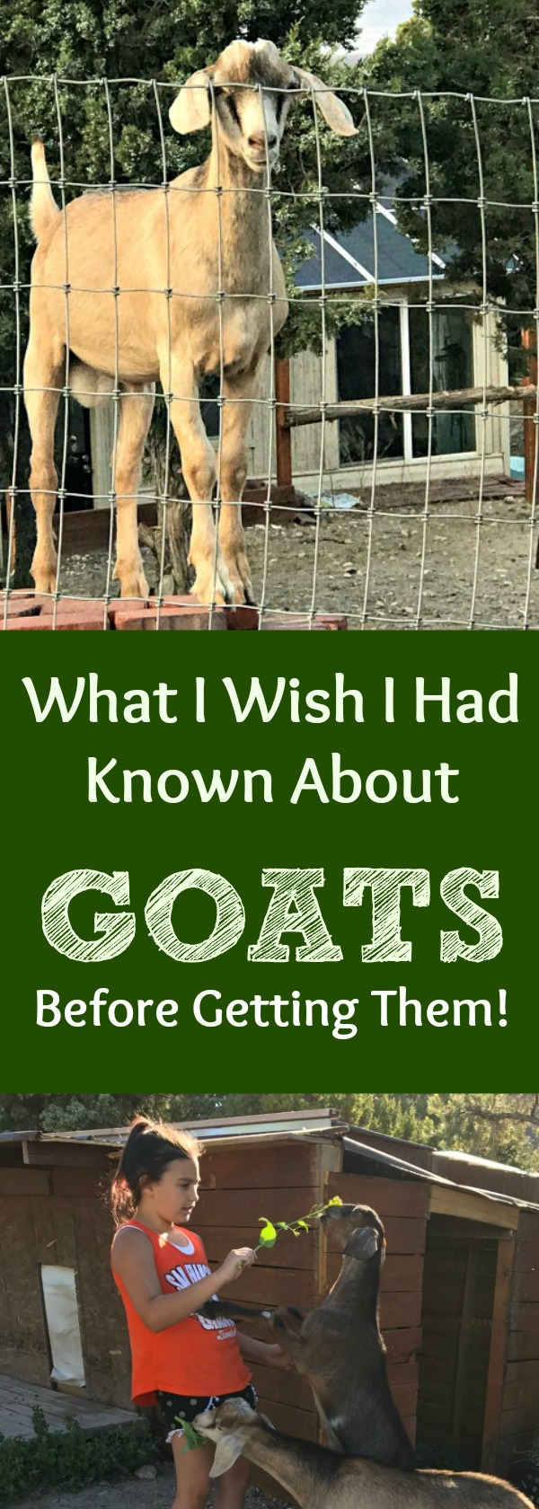 Everything you hear about goats being the perfect backyard pet or livestock animal...may not be quite true. Here are all the things I wish we had known before getting our goats! P.S. I don't regret getting goats one. single. bit. :-)