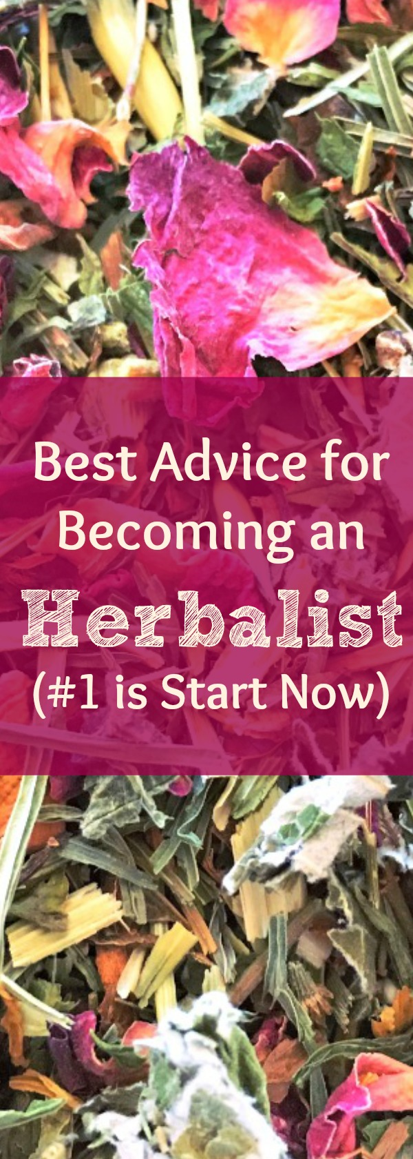 How to become an herbalist. Best advice from an herbalist on how to become a career or community herbalist. How to get started in your herbal career. How to get started learning about herbs! Find out my 8 best tips for learning herbalism. #herbalism #learnherbs #howto #naturalremedy #health #naturalhealth #healingharvesthomestead