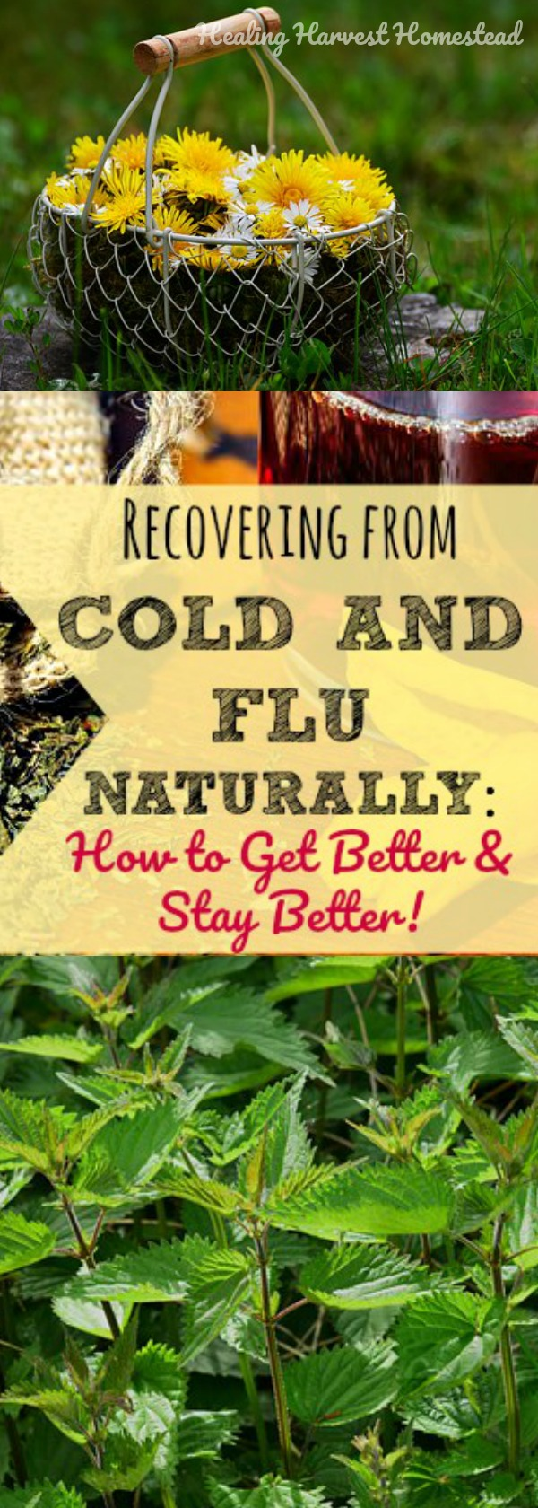 So, you've beaten the cold or flu---or so you think. BAM! Just when you least expect it, that illness comes roaring back! Here's how to speed up the recovery time from a cold and flu and get better fast. Find out how to use herbs and natural methods to keep getting better from a cold or flu and not end up sick again.