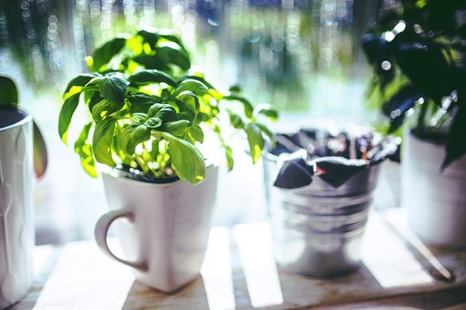 Even a simple thing like growing some herbs in your kitchen is easy to do and you have fresh, healthy herbs to cook with!
