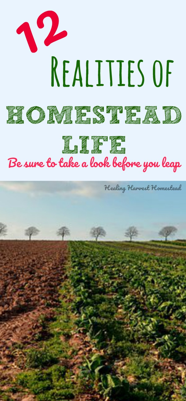"""Do you have a dream to start your own homestead? Online it's easy to only see the """"good"""" stuff. Cute animals, pastured livestock, happy chickens, a vast garden. In reality, Homesteading is hard work. Here are 12 important realities you need to know about the homestead life. Just keeping homesteading real, here. #howtostart #homestead #skills #preparedness #selfreliance #real #life #healingharvesthomestead"""