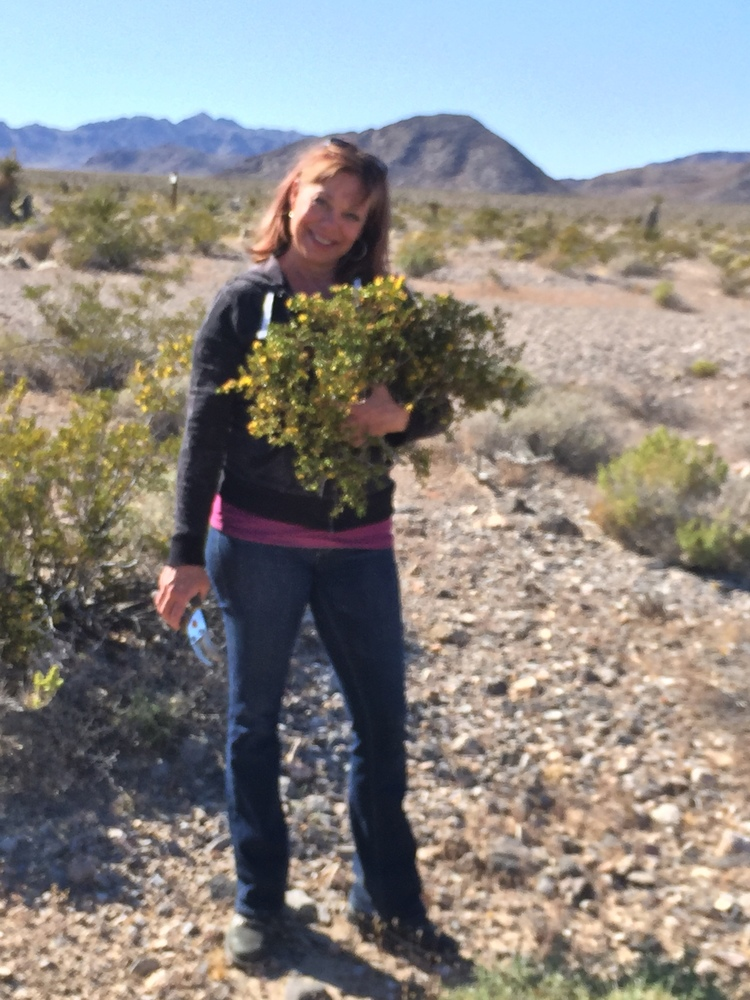 Here I am last spring foraging for chaparral. I'm ready to get out there and gather some more this year, before we move away.
