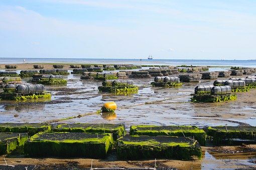 This is an oyster farm. Even though it's farmed seafood, it is still a TON better than anything genetically modified (which in our country requires no warning label, for those who care).