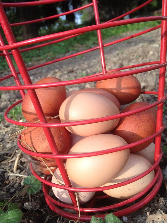 Freshly gathered eggs from your own hens is BEST, but if not, then go for pasture-raised!