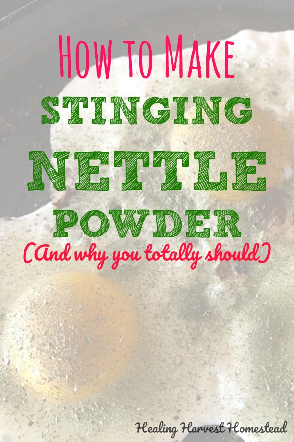 Why are Nettles (Urtica dioica) so great for you? Why should you consider adding them to your diet? And how can you add nettles to your eating plan if you don't grow your own fresh stinging nettles? How to eat your nettles when you don't want to touch them in the first place? Find out how to make stinging nettle powder and add some nutrition to your healthy lifestyle!