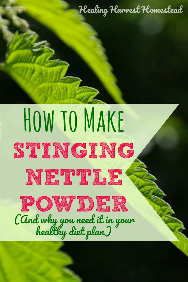 How can you use stinging nettles to increase the vitamins you get every day? Find out why nettle is such a useful medicinal herb...and also why you should include it in your daily diet. It's easier than it sounds! Just make up some nettle powder top have on hand, and you can sneak it into your family's food without them even knowing! How to make nettle powder--so easy!
