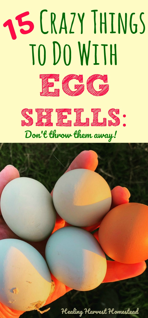 Do you see your eggshells as trash? Turns out, there are many wonderful ways to use eggshells around your home & garden? Find out 15 ways to use eggshells that will turn this trash item into something useful every day. You can go zero waste with your eggshells too! How to use eggshells as a calcium supplement, how to use eggshells to make sidewalk chalk, and LOTS more! #eggshells #waystouse #extraeggshells #diy #uses #frugal #zerowaste #healingharvesthomestead #zerowaste