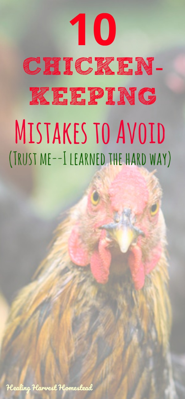 Here are the How Not To's of Chicken Keeping. Are you thinking about raising chickens? Or maybe you already have your hens, but things just aren't what you thought they'd be? Well, here are the most common mistakes people make with their chickens. Learn from my chicken experiences, and don't make these common mistakes! Pasty butt, predators, space issues, and lots more! #chickens #chickenraising #raisingchickens #chickenmistakes #howtoraisechickens