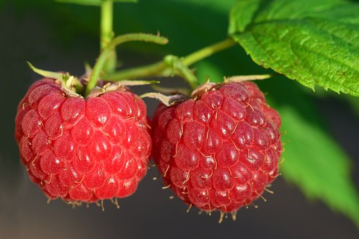 Raspberry Seed Oil is another possible winner in the natural SPF category.