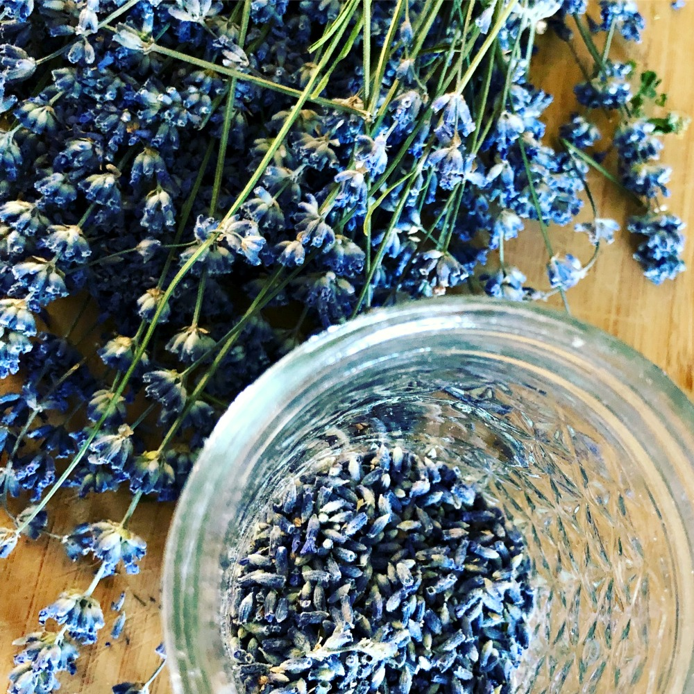 Some herbalists love to grow their own herbs, like this lavender I picked from my garden. But no worries if you can't forage or grow your own! You can purchase wonderful herbs from suppliers like  Starwest Botanicals .