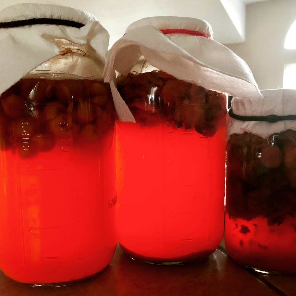 Here are cherry and strawberry vinegars processing. This is before I strained out the fruit. At this point, it's still fermenting and changing to vinegar.
