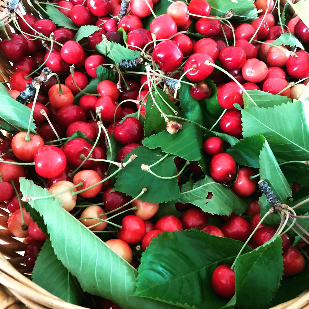 These fresh-picked cherries from the orchard created the vinegar you see on the right in the main picture.