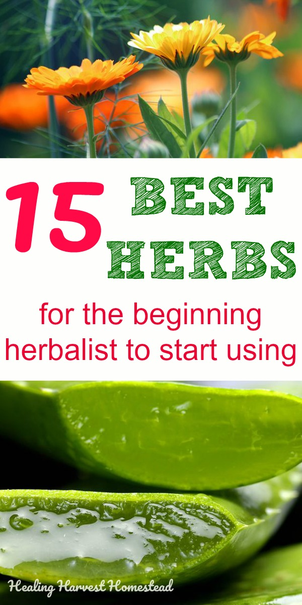 There are hundreds of herbs the beginning herbalist can use for home remedies. The number is overwhelming! Here are my best herbs for the beginner herbalist to start using to create a home apothecary. How to make your own remedies and get natural health with these plants. #apothecary #apothecaries #training #learnhow #best #herbs #herbalist #herbalism #health #homeremedies #natural #remedy #remedies #howtomake