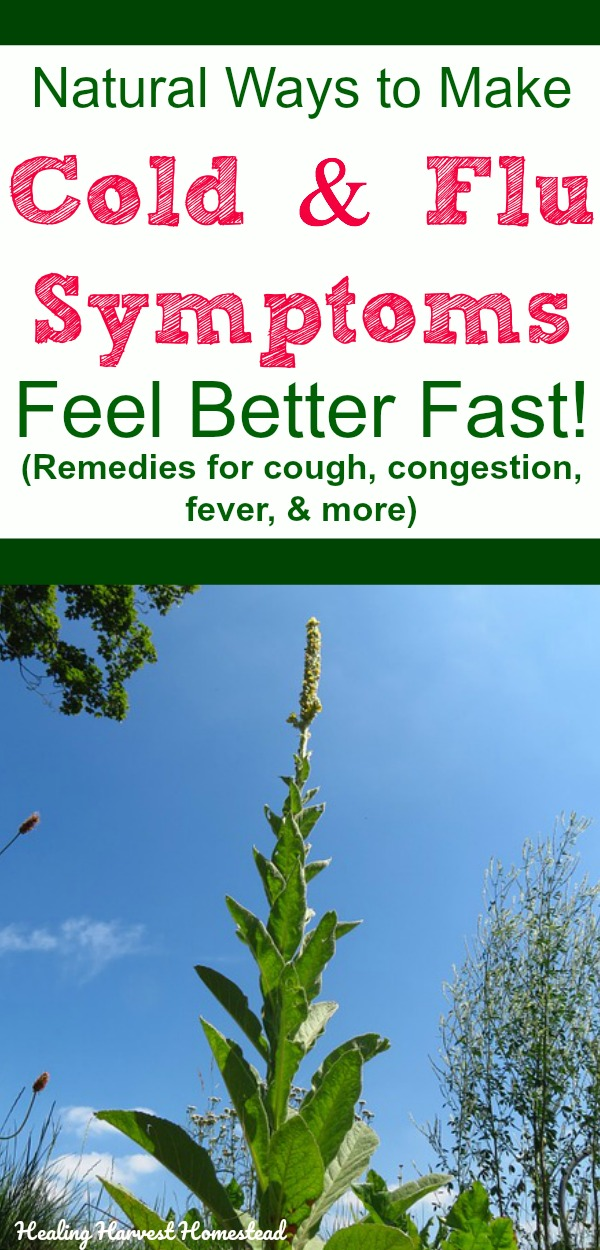 You ended up with a bad cold or flu, and now you're suffering from the symptoms. Here are natural remedies and herbs to use to help with the symptoms of colds & flu, including cough, congestion, fevers, and sore throat. Find out how to make your own home remedies that help you feel better fast. #healingharvesthomestead #cold #flu #getridof #homeremedy #naturalremedy #remedies #health #getwellfast #getbetterfast #symptoms #cough #sorethroat #fever #congestion