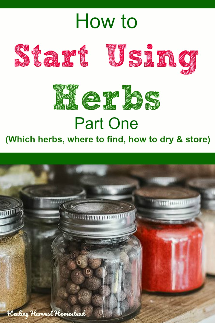 How to start using herbs for health! How to choose which herbs to use, where to get them (foraging, growing in a garden, buying), how to dry herbs and wild plants, and how to store them correctly. If you've ever wanted to be an herbalist and use herbs, your basic questions will be answered in part one of this 12 part series. #healingharvesthomestead #use #herbs #howto #forage #grow #dry #store #usingherbs #fromthegarden #naturalremedies #togrow #inthegarden #health #healthy #herbalmedicine