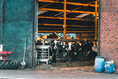 Overcrowded conditions is just one of the problems in most CAFO's.