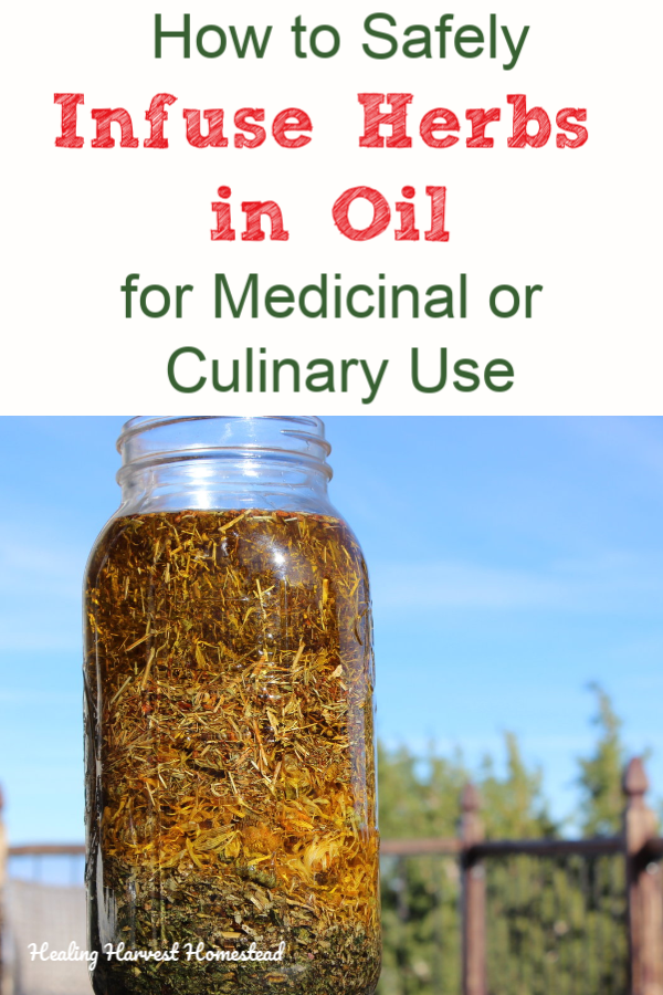 Have you been wanting to make your own herb infused oils to create salves, body care products, or just to cook with? There are some important things you need to know, and here are the steps for how to make herbal infused oils. Herbal infusions in oil are so easy, but if you don't do it right, you can end up with a mess! #howtomake #herbinfusedoil #infusedoil #herbalinfusion #medicinaloil #healingoil #healingharvesthomestead