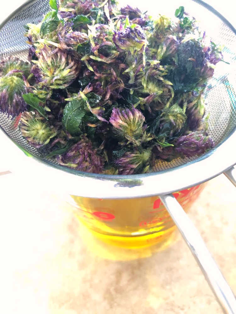 Here I'm straining off the oil that has been infused with Red Clover (Trifolium pratense).