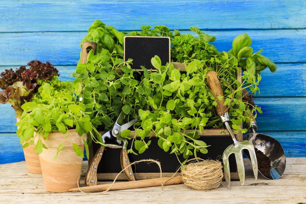 Pic Herbs in Pots.jpg