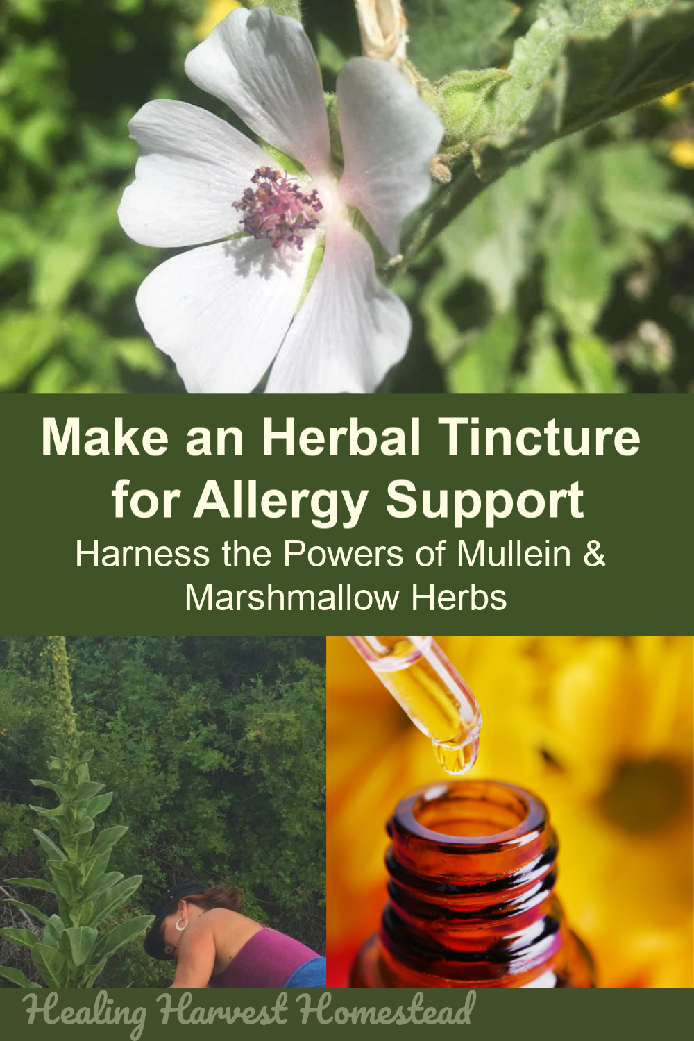 It's nearly time for seasonal allergies, and I've got an herbal remedy for you! This tincture is easy to make and only requires two herbs. Home remedies are often the best way to go. If you want to soothe inflamed sinuses and calm a runny nose, you'll want to get started making this tincture to day. You can also use the blend in tea form as well, in case you can't wait for the tincture. #herbal #homeremedy #naturalremedy #allergyseason #itchynose #runnynose #inflammation #sinus #congestion #tincture #healingharvesthomestead
