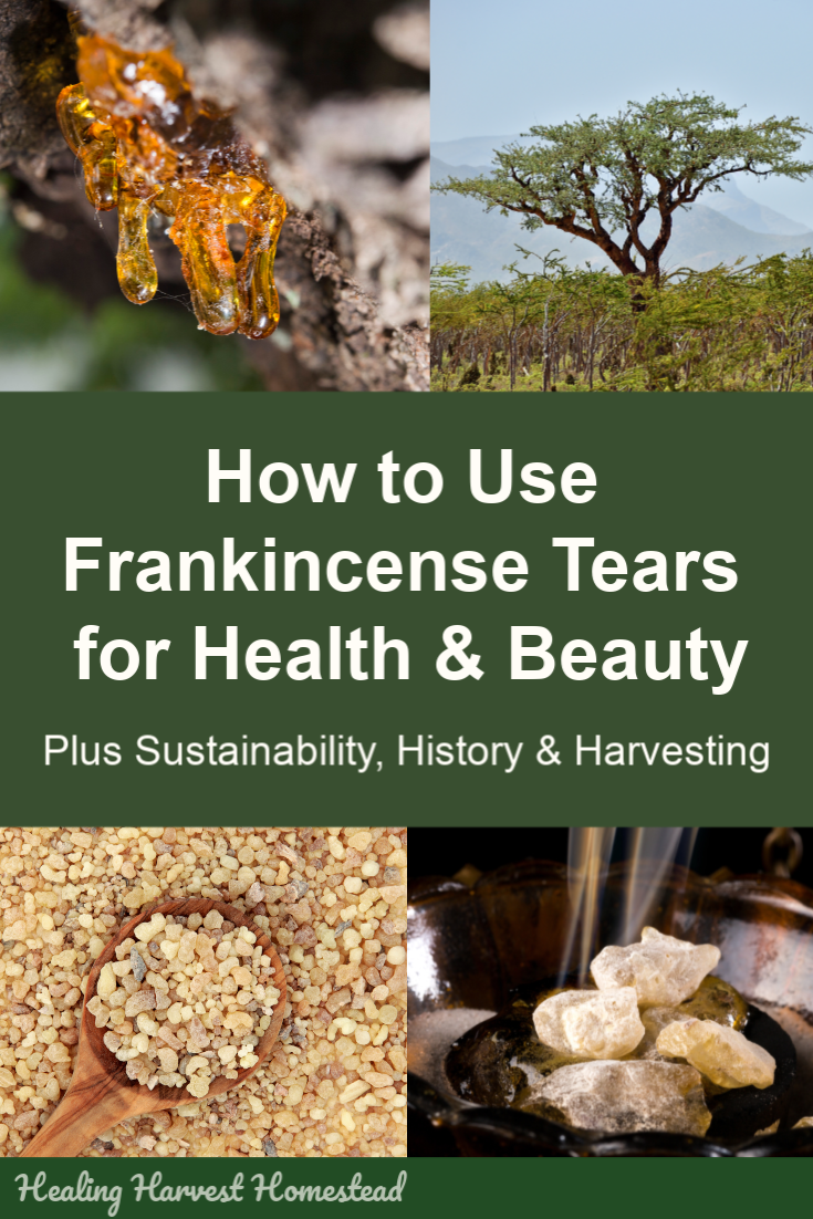 Have you ever wondered about how to use frankincense tears? Not the essential oil—the real tears, or resin, from the Boswellia tree. There are many ways to use these golden tears of resin for health and beauty, as well as for mental clarity. Click through to find out about these wonderful little gems and how you can use them in your home. #frankincense #tears #resin #howtouse #health #beauty #mentalclarity #healingharvesthomestead #homeremedy