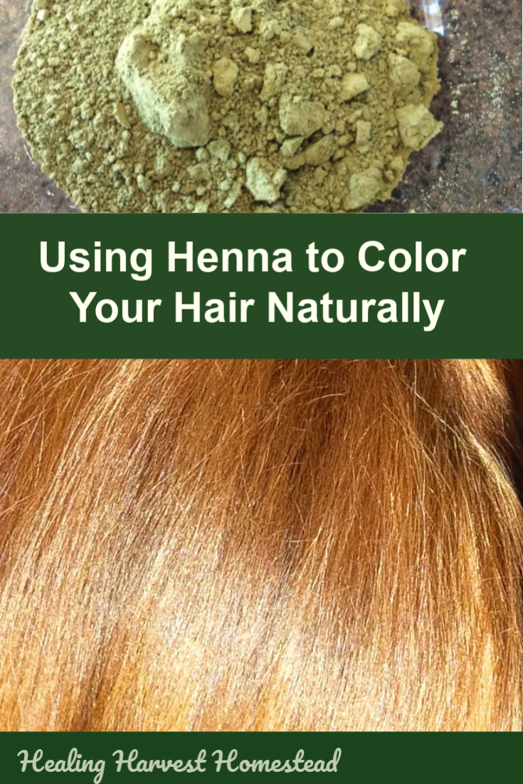 Henna is a natural plant color that binds to the proteins in your hair. Find out how to dye your hair naturally using this amazing conditioner from the plant world. You may never go back! #hennaforhair #hair #color #dye #natural #colorhairnaturally #healingharvesthomestead #henna