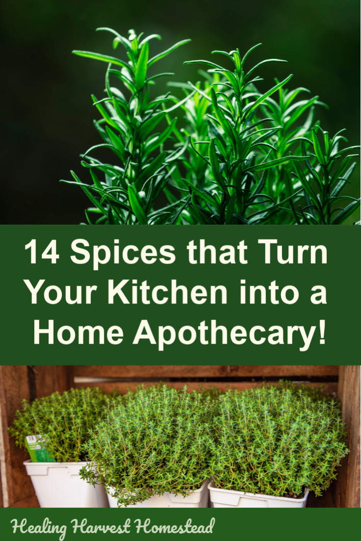 Did you know you have medicinal herbs in lieu of spices in your kitchen cupboard? Yes! You probably have an apothecary in your own kitchen. Find out how you can build a natural pharmacy by using typical and common culinary spices. Health can come naturally by using these spices in your home. #kitchen #spice #apothecary #pharmacy #natural #herbs #spices #healingharvesthomestead #firstaidkit #herbal