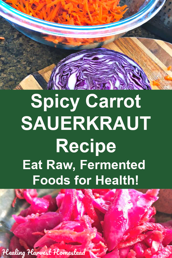How to make your own fermented cabbage (also known as sauerkraut). My spicy carrot sauerkraut recipe has all the health benefits PLUS because it's sauerkraut with a spicy, garlicky, carrot twist. This kraut is exceptionally delicious, easy to make! Follow directions to ferment your own spicy carrot kraut with a  twist! Get your natural probiotics in for your gut health! #sauerkraut #rawsauerkraut #recipe #carrot #cabbage #directions #howtomake #healingharvesthomestead