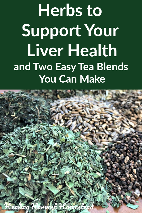Sometimes we can be hard on our livers—processed foods, too much alcohol once in awhile….you know, normal life! There are herbal ways you can support your liver every day, helping your body along with its natural detoxification process. Here are two easy tea blends you can make at home and how to use them. #liver #detoxification #cleansing #detox #howto #herbs #fortheliver #tea #herbalism #plantmedicine #homeremedy #healingharvesthomestead