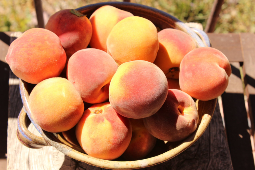 Here is a bowl of the peaches out of the huge box! :-)
