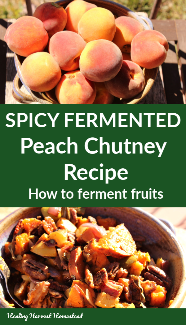 Are you wondering what to do with ALL those peaches this late summer harvest season? Well, how about trying out fermentation! Here is a tutorial for fermenting fruit, plus my recipe for a spicy peach chutney that is healthy and delicious. It's so easy, and fermentation is a traditional food preservation method! #ferment #peaches #fermented #spicy #healthy #easy #recipe #healthyrecipe #easyrecipe #peachrecipe #healingharvesthomestead