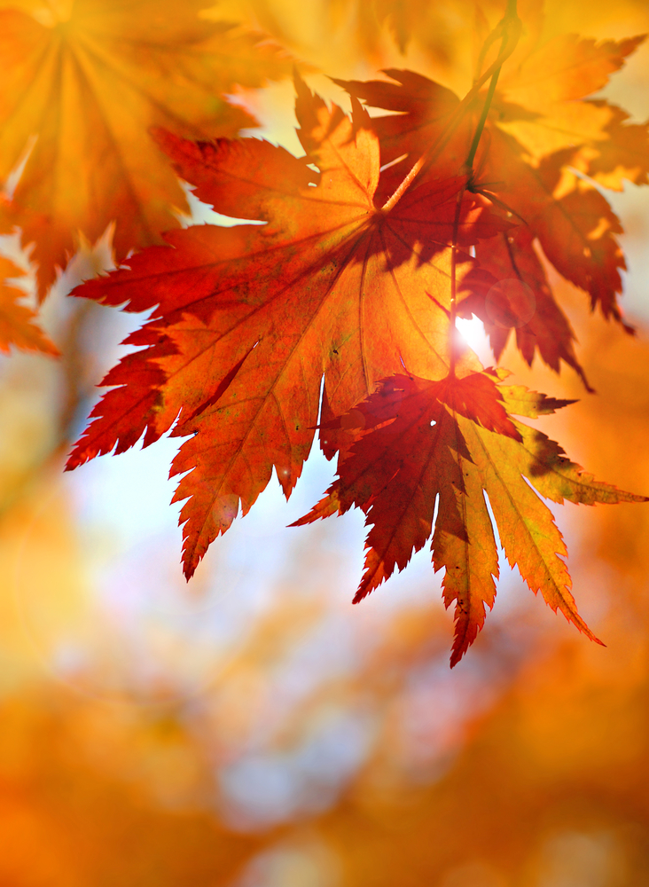Have you smelled the spicy scent of Fall leaves?