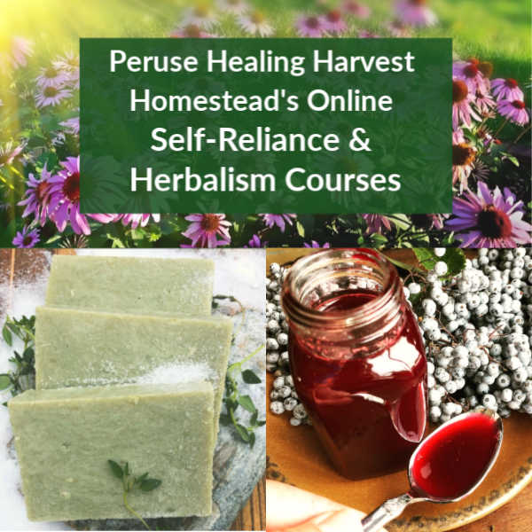 CLICK HERE for more information!  Learn safe, effective, empowering home herbalism, natural soap making, medicine making, and more!