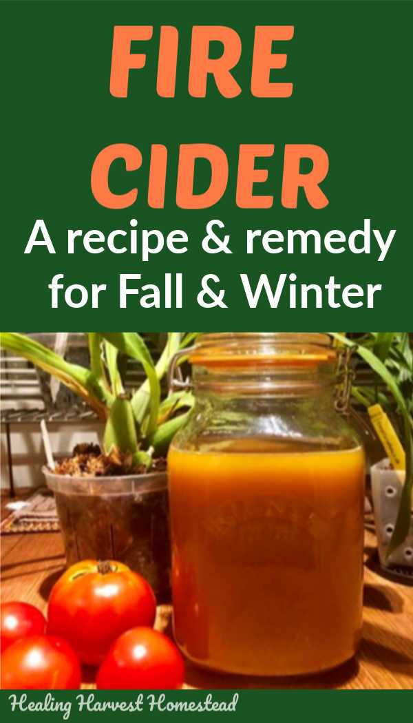 Fire Cider is a Fall and Winter health and wellness tonic drink you'll want to start making now to be ready for cold and flu season. It's an easy to make immune boosting sipping drink that can even be used in your cooking! Find out my version of this popular  recipe for Fire Cider by clicking through and giving it a try!  #firecider #benefits #homeremedies #immuneboostingfoods #immuneboost #howtomake #getridofcold #natural #remedy #healingharvesthomestead #rosemarygladstar
