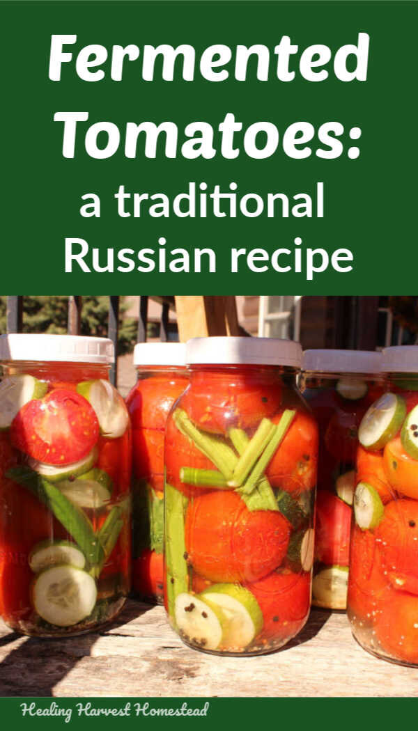 Are you lucking out with a ton of tomatoes this harvest season? Well, it's not too late to give this quick, easy, healthy recipe for traditional fermented tomatoes using this Russian recipe from the Old Country. No canning required to preserve your tomatoes! You'll have delicious, gut-healthy probiotic preserved food in no time! #fermented #fermentation #howto #preserve #tomatoes #recipe #tomatorecipe #preservingtomatoes #healingharvesthomestead
