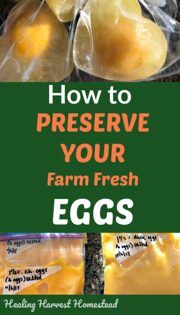 Do you have a lot of extra eggs? And you don't want them to go bad? What to do with all those extra eggs?  Besides using them in recipes, you might want to consider preserving them . Here are the best ways to preserve your extra eggs, along with directions for each method. You'll want to find out how to store your extra eggs for the long term! #preserveeggs #howtopreserveeggs #freezeeggs #dehydrateeggs #pickleeggs #foodpreservation #healingharvesthomestead