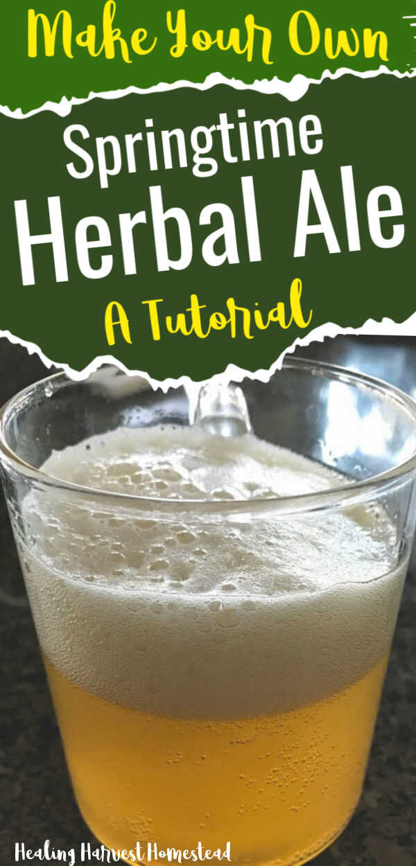 Making your own beer or ale is really quite simple. You can even use herbs you forage yourself to make a unique and lovely tasting, healthy home brew. Here's a tutorial for how to make a springtime home brewed beer you'll just love! #homebrew #homemadebeer #homemadeale #beer #herbal #howtomake #recipes #fermentation #healingharvesthomestead #healthydrink