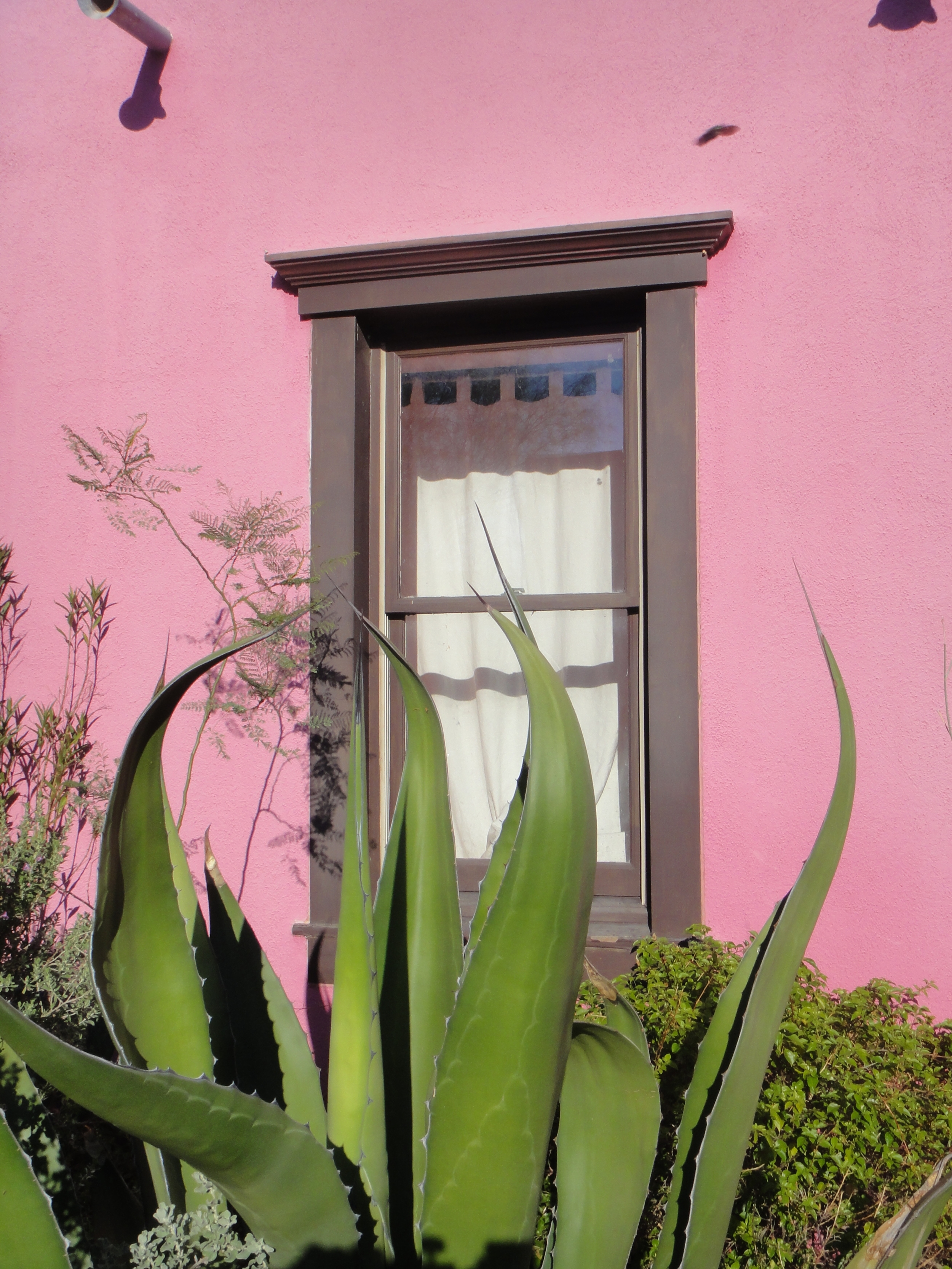 Tucson has lots of pink, from sherbet to Pepto-Bismol.