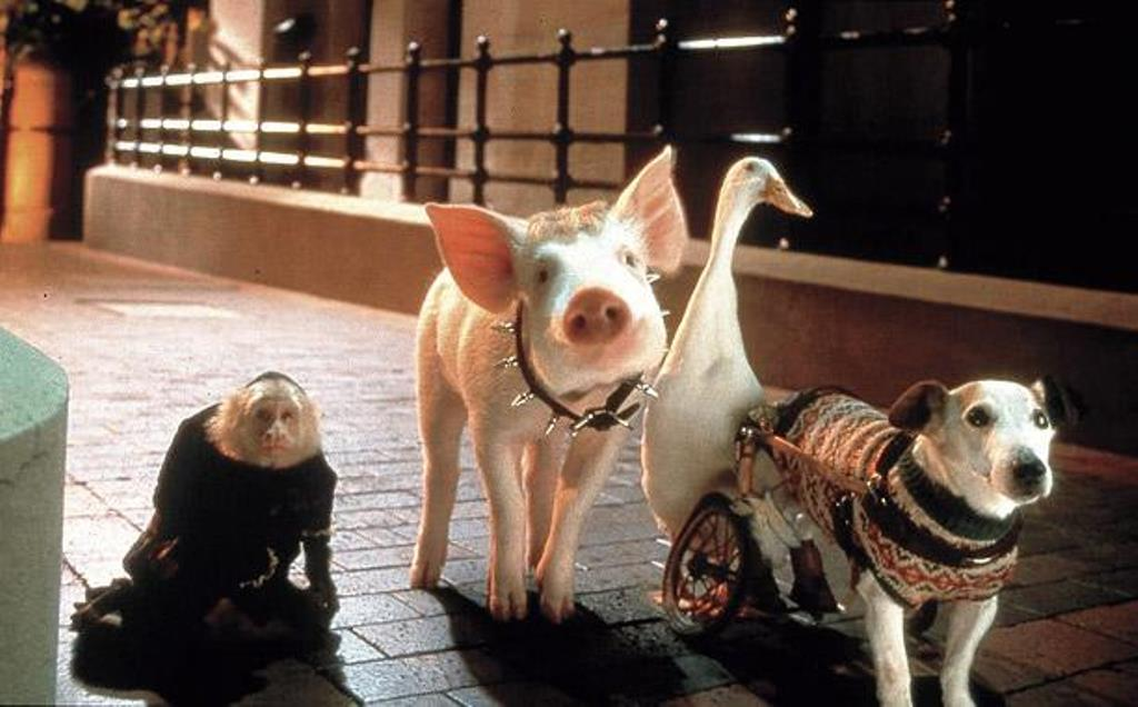 Babe-Pig-In-The-City-Review_612x380.jpg