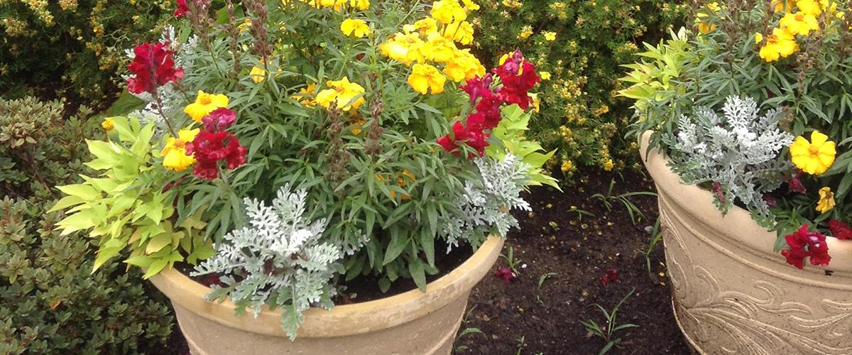flowerpotgarden.jpg
