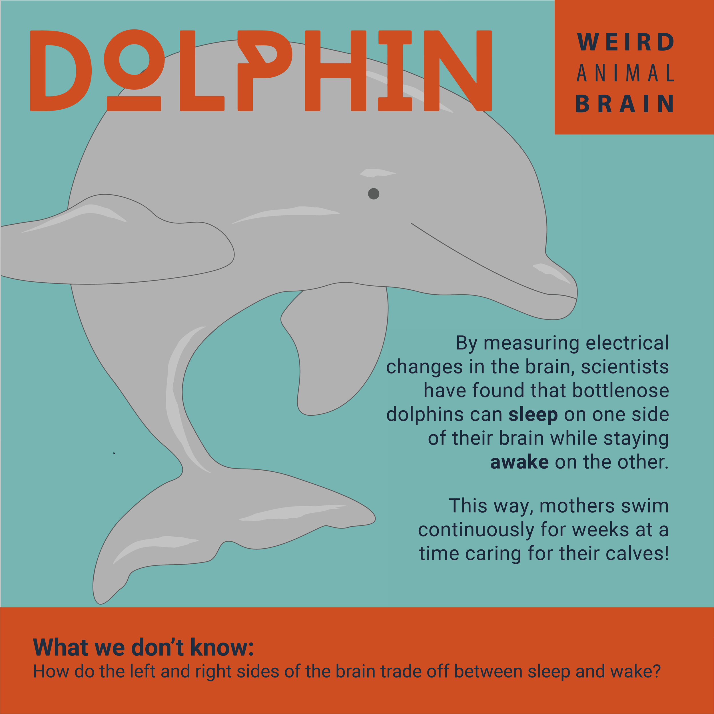 Dolphin-New.png
