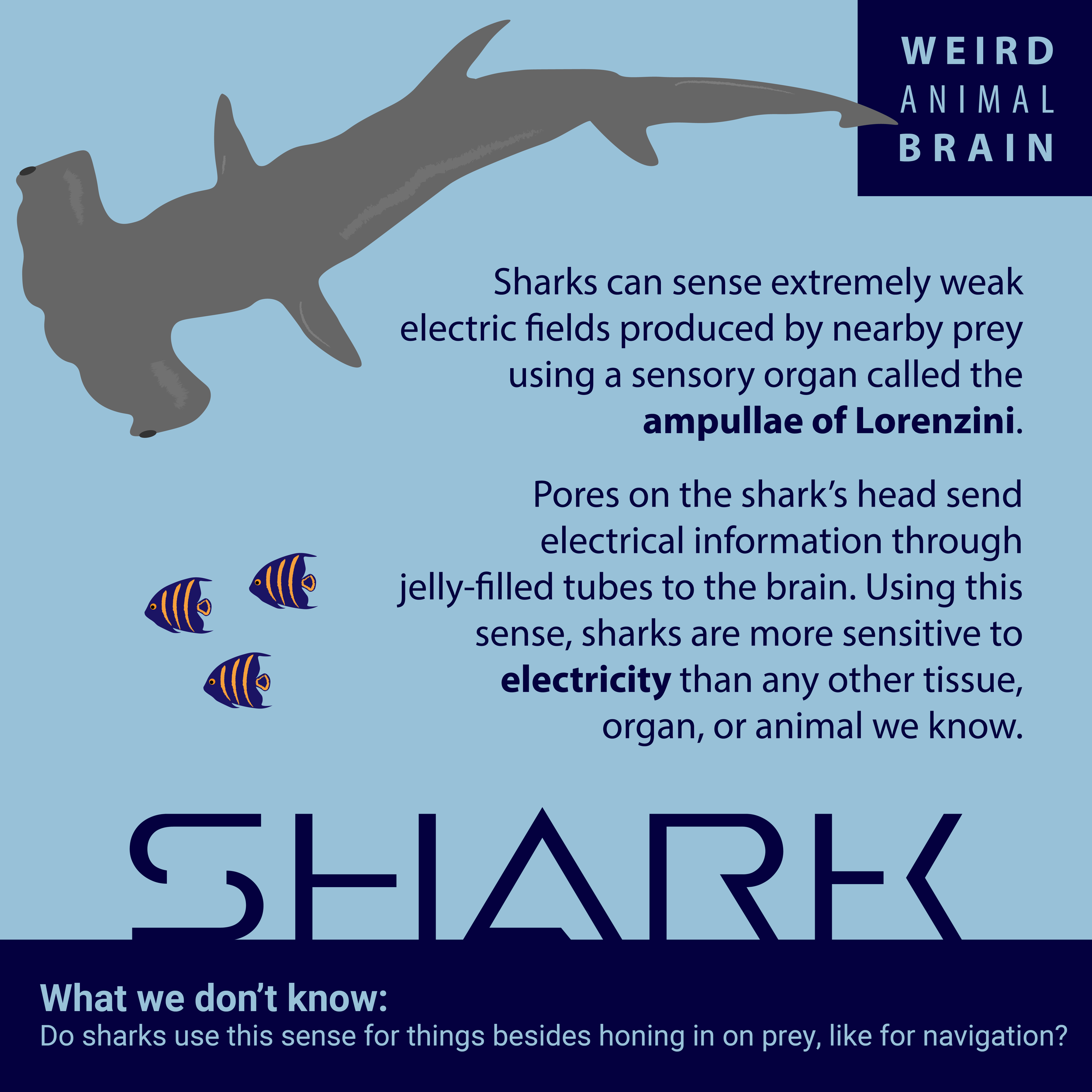 Shark-New-01.png