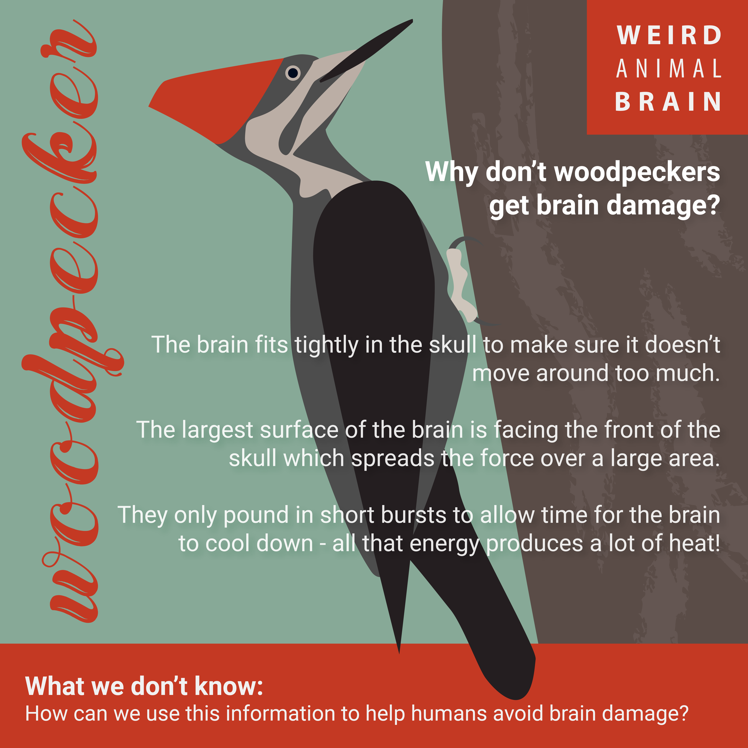 Woodpecker_New-01.png